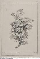 Plate C19 from the Livre de légumes inventées et dessinées par J. Me.r …], [1734-1742