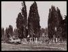 Cimetière turc, 1870s-1880s