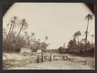 Oasis à Bou-Saäda, [187]